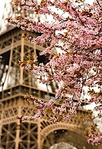 eiffel_tower_cherry_blossums